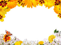 从花的框架在被隔绝的白色背景 免版税库存照片