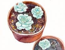 花的水彩例证在罐的 免版税库存照片