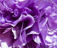 从花的瓣的自然紫色背景 免版税库存照片