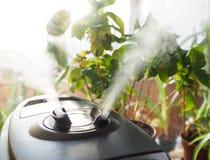 花的耕种的增湿 从空气润湿器的蒸汽在屋子里 库存照片