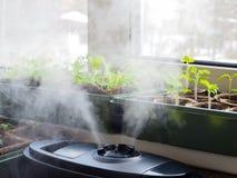 花的耕种的增湿 从空气润湿器的蒸汽在屋子里 免版税库存图片