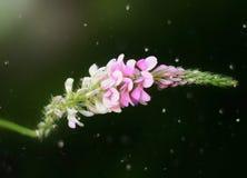花的艺术图片 库存照片