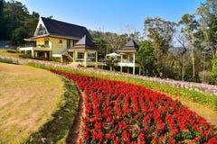 花的领域在女王诗丽吉植物园的 库存照片