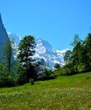 花的领域在瑞士阿尔卑斯 免版税库存照片
