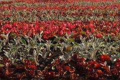 花的领域在花圃里 库存图片
