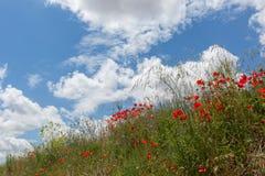 花的领域 图库摄影