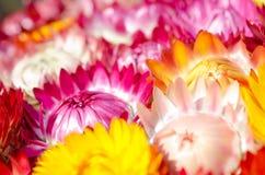 花的颜色。 库存照片