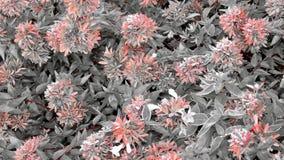 花的颜色 库存图片