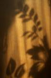 花的阴影 免版税库存图片