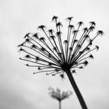 花的黑白照片 免版税图库摄影