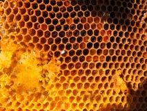从花的Puere甜蜂蜜梳子 免版税图库摄影