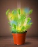 从花盆出来的发光的叶子 图库摄影