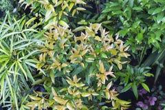 花盆照片背景 热带叶子植物在异乎寻常的庭院里 库存图片