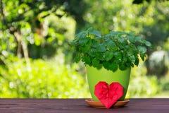 花盆用origami的芳香薄菏和心脏 在自然绿色背景的薄荷的灌木 免版税库存照片