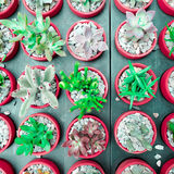 花盆的仙人掌多汁厂,平的位置-上色口气 免版税库存照片