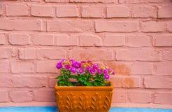 花盆紫色 图库摄影