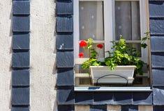 花盆被安置在老布里坦尼房子窗口  免版税库存图片