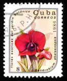花石斛兰属兰花植物,大约1986年 库存图片