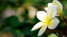 花秀丽,当暴露在影响花的阳光 免版税库存图片