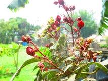 花种植红色 免版税库存图片