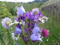 花简单的花束在山收集了 免版税库存图片