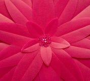 花粉红色 免版税库存图片