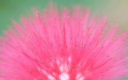 花粉 免版税库存图片