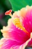 花粉 免版税库存照片