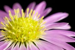 花紫色 库存图片