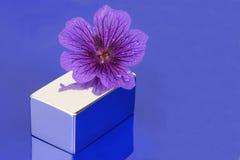 花紫色 库存照片