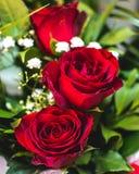 花红色上升了 爱符号 夏天庭院花 库存图片