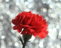 花红色玫瑰和bokeh 免版税库存图片
