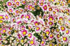 花纹理 库存图片