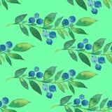 花纹花样水彩蓝莓 免版税库存图片