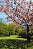 花结构树 库存照片
