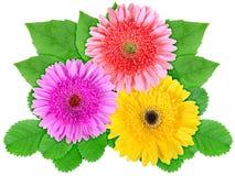 花绿色叶子五颜六色 免版税库存照片