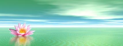 花绿色百合海洋 库存照片