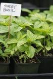 紫花罗勒植物开始卖了在一个农夫市场上在加利福尼亚 免版税库存图片