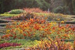 花美术的焕发的生动的颜色在庭院里 免版税库存照片
