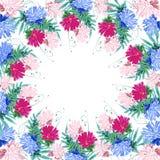 花翠菊花圈quadro框架正方形 库存照片
