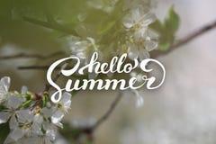 花背景和你好夏天字法 库存照片