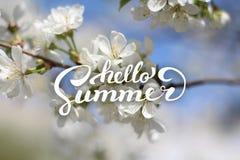 花背景和你好夏天字法 图库摄影