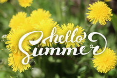 花背景和你好夏天字法 免版税库存照片