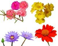 花背景自然红色beautifil桃红色颜色 免版税库存照片