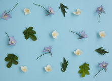 花背景-茉莉花和翠雀 免版税库存图片