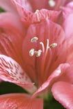 花花卉背景 图库摄影