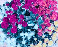 花花束背景 桃红色洋红色和蓝色玫瑰 免版税库存图片