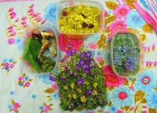 花花梢 美丽的不可食的花和植物静物画一条五颜六色的围巾的 免版税库存图片