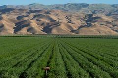 紫花苜蓿农田和山在南加州 免版税图库摄影