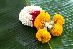 花茉莉花诗歌选在香蕉叶子背景的 免版税库存照片